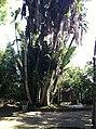 Iguape - SP - panoramio (294).jpg