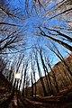 Il monte Polveracchio in dicembre con gli alberi spogli.jpg