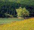 Il verde della Sila.jpg