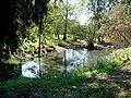 Ilanot National Arboretum b-RJP.jpg