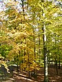 Im Wildparadies Tripsdrill - panoramio.jpg