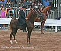 Images from the 2009 Shelbyville Horse show (3802018291).jpg