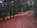 In Devilsden Wood, near Coulsdon, Surrey - geograph.org.uk - 608727.jpg