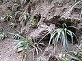 Inkaterra Machu Picchu Pueblo Hotel and Nature Reserve - Aguas Calientes, Peru (4875690175).jpg