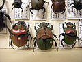 Insect Safari - beetle 45.jpg