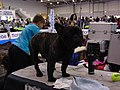 International Dog Show 2018 19.jpg