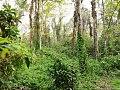 Into deep forest.jpg