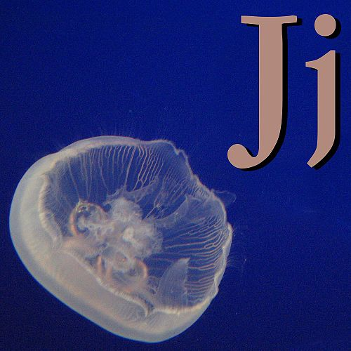 J is for Jellyfish.jpg