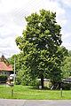 Jažlovice - obecní lípa a obecní studna.jpg