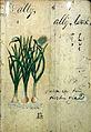 Japanese herbal, 17th century Wellcome L0030039.jpg