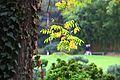 Jardin Japonais, Toulouse (8103224473).jpg