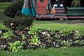 Jardin des plantes de Toulouse en hiver 01.JPG