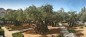 Gethsemane - Garden of Gethsemane