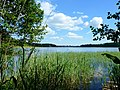 Jezioro Sępoleńskie w oddali zabudowania miasta - panoramio.jpg