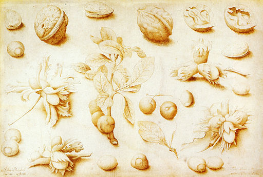 John Dunstall Walnuts and Hazelnuts 1666