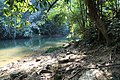 Jungle forest stream, Khlong Phanom, Thailand.jpg