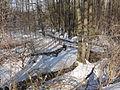 Kümmernitz im winterlichen Wald.JPG