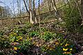 Kalktuffquellen am Jakobsbrunnenweg in Amstetten 2014-03 02 NÖ-Naturdenkmal AM-081.jpg