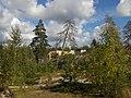 Kallistunut puu,Kivikko - panoramio.jpg