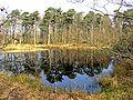 Kampsheide nabij Rolde Drenthe2.jpg