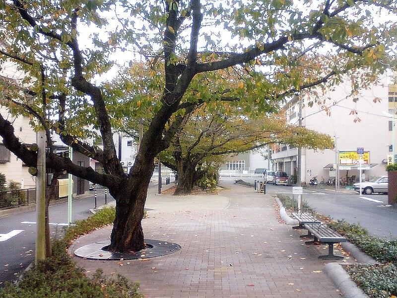 File:Kasumori nakaisuji.jpg