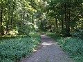 LSG Waldgebiet des Tiergartenwaldes PM-18-02.jpg