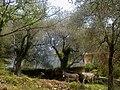 La Roya Breil Gite La Colombiere Anes - panoramio.jpg