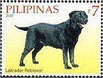 Labrador-Retriever-Canis-lupus-familiaris 2010.jpg