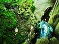 Labradorite wood no filter.jpg