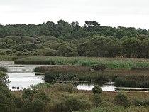 Lagoa de Cospeito.JPG