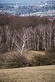 Lainzer Tiergarten Wildschwein Baderwiese 2.jpg