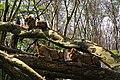 Lake-Nakuru-Lions-in-Tree.JPG