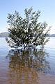 Lake Hume at 100 per cent in November 2010.jpg