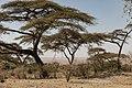 Lake Langano in Oromia Ethiopia 05.jpg