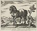 Landschap met paard uit Rome. NL-HlmNHA 1477 53011499.JPG