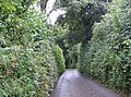 Lane to Bathpool - geograph.org.uk - 530658.jpg