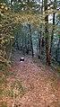 Las Descargues - Along the Ridge - Twin Actinic Midi Robinson (28075340356).jpg
