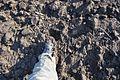 Lead boots, Vojvodina trekking.jpg