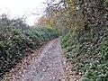 Leafy lane - geograph.org.uk - 623855.jpg