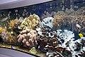 Lebensraum Korallenriff 1.JPG
