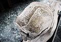 Leona ibérica de Nueva Carteya - Museo Arqueológico y Etnológico de Córdoba.jpg