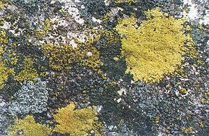 Evolutionary history of life - Lichens growing on concrete