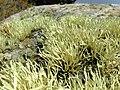 Lichen (rogerjones).jpg