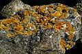 Lichen - geograph.org.uk - 252585.jpg