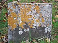 Lichened Gravestone, St. Maurice, Horkstow - geograph.org.uk - 1557298.jpg