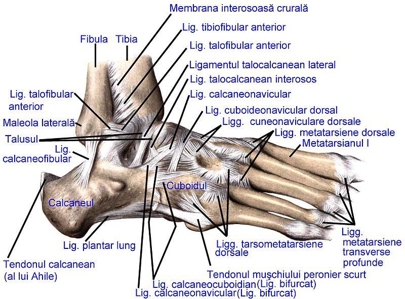 durere si umflatura a labei piciorului stang | Forumul Medical ROmedic