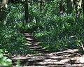 Lilac Pathway - geograph.org.uk - 1323067.jpg