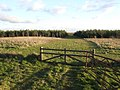 Linch Hill Woods - geograph.org.uk - 321006.jpg