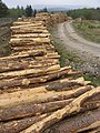 Log piles - geograph.org.uk - 424266.jpg