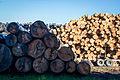 Logs at a Sawmill.jpg